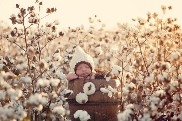 Baby in field of organic cotton