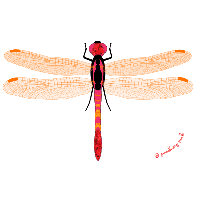 dragonfly design on white background by Gooseberry Pink